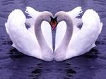 Love Sign / Liebeszeichen