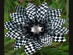 NASCAR-Flower