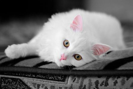 Who wants me ? - cute, kitty, black and white, white, cat, eyes, pink, sweet