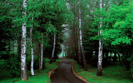 Forest - road, green, nature, trees, forests
