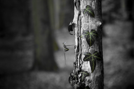 Leaves of Nature - forest, isolated, black, utopia, tree, leaves, photography, white, wood