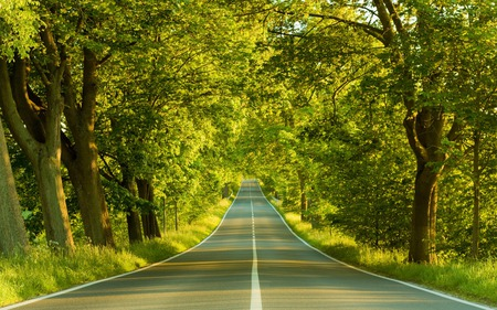Highway - highway, photography, nature, trees