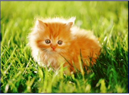 ball of ginger fun - kittens, ainimals, cats