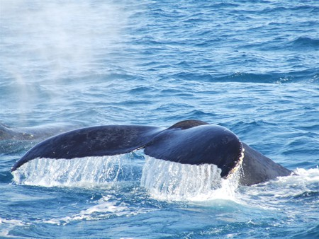 Zoomed In Whale Tail - whales, big, tails, ocean