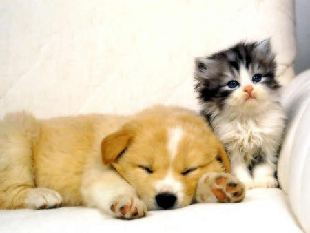 Cats & Animals Background Wallpapers