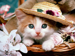 Kitten with Hat :)