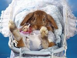 Bunny in a Carriage