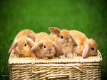 Bunnies in a Basket