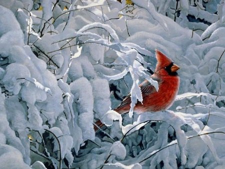 Winter with cardinal birds animals background - Winter cardinal background ...