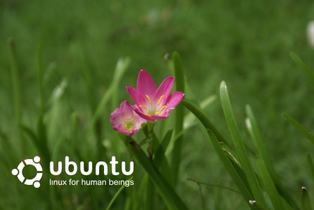 Flowers and Grass - ubuntu, wallpaper, philippines, a100, dslr, sony