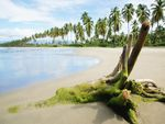 Exotic beach sand wood palm trees