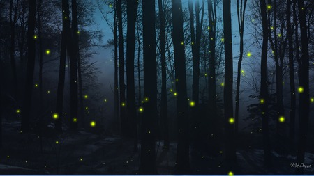 Firefly Nights - firefox persona, widescreen, blue, dark, trees, woods, forest, night, fireflies