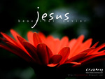 Divine petals