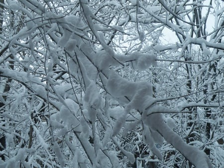Magical Matrix of Snowy Arms - blizzard, snow, ice, snowstorm, trees, branches, winter