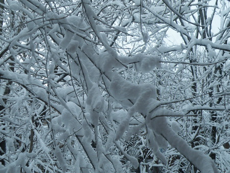 Magical Matrix of Snowy Arms - blizzard, snow, snowstorm, winter, branches, ice, trees