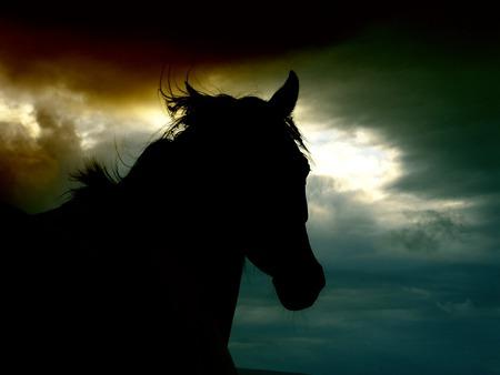 Running Wild Horses Animals Background Wallpapers On Desktop