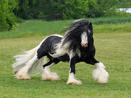 PRETTY HORSE - pretty, black, horse, white