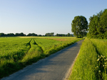Dutch grass field