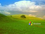 longhorn field