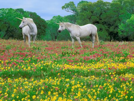 Magic-Meadow - flowers, unicorns