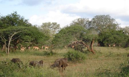 Common Warthog and antelope - habitat, antelope, ecology, pig, ecosystem, warthog