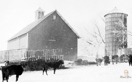 Grandpa's Barn & Silo in Winter - iowa, winter, cows, old, farm, rural, barn