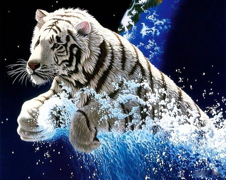 Tiger Splash Cats Animals Background Wallpapers On Desktop Nexus