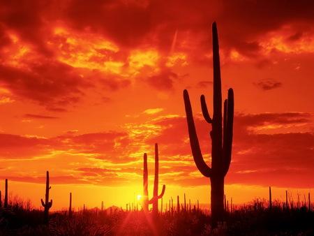 Sunset Desert - cactus, sunset, sundown, desert, red