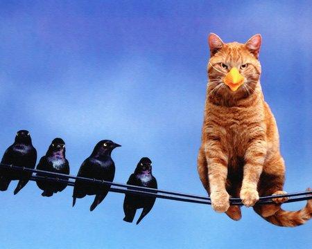 I'm a bird (: - animals, cat, brid