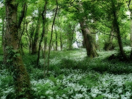 Lush Green Forest  - flowers, forest, scenery, spring, nature, trees