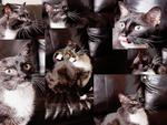 collage of my kitty trouble