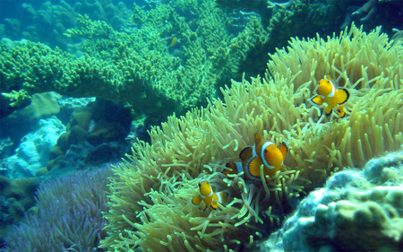 coral reef - fish, water, reef, coral