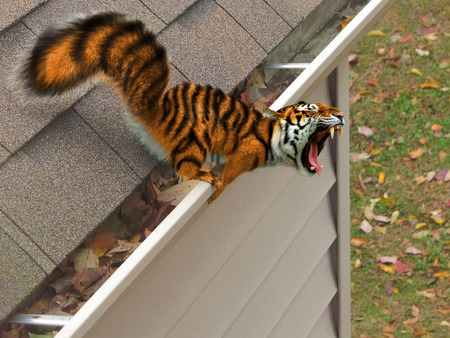 Squiger - cg, tiger, abstract, animal, comical, vicious, roar, squirel, fangs, funny, teeth
