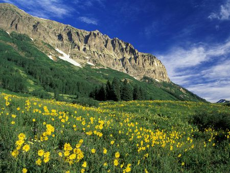 Alpine-Meadow - flowers, mountains, meadow