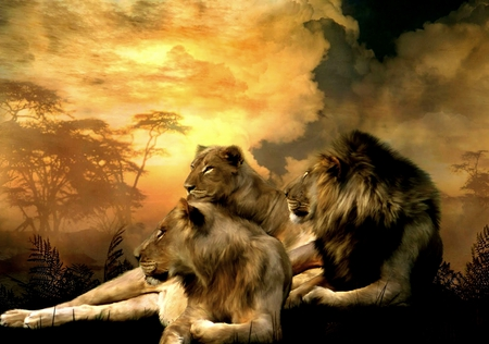 THE KING AND QUEENS - lioness, queens, king, wild, lion