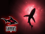 Jacksonville Sharks 2 Wallpaper