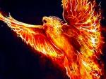 Phoenix Fractalius