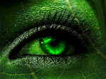 EYE OF A GREEN LEAF