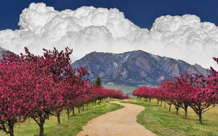 Amazing Landscapes Fields - Fields & Nature Background Wallpapers ...