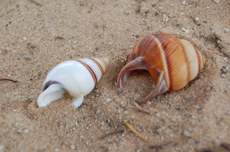 seashells - beach, sand, seashell