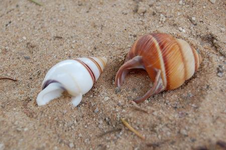 seashells - seashell, sand, beach