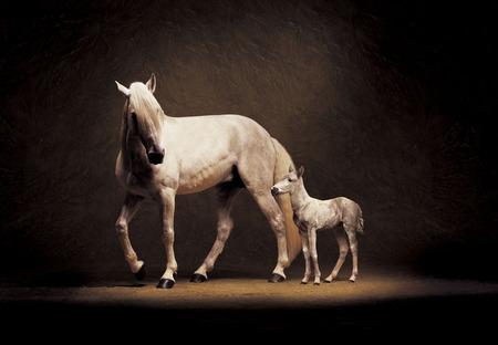 Beautiful Horse Baby Horses Sweet Cute