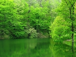 green pond in the Blacksea  zone           Turkey