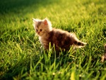 Cute grass Kitten (WdS)