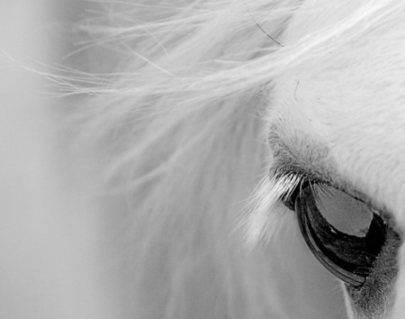 Horse close up - stallion, cavalo, horse, animal
