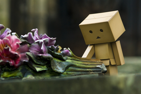 Flowers with Danbo - flowers, robot, danbo