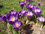 Hallo Spring