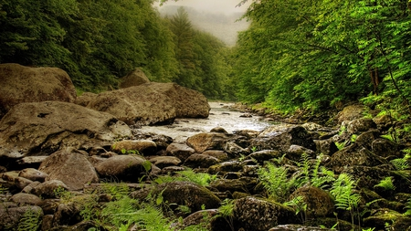 mountain stream - water, mountain, pure, stream