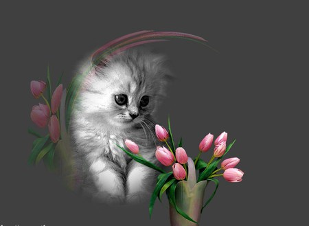 Spring is for everyone - budding, pink, tulips, vase, kitten, gray