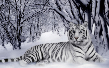 White Tiger - kev, snow, white, cat, trees, whitetiger, tiger